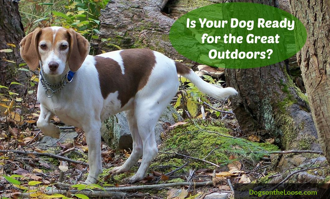 Ready to go on that hike with your dog? Don't forget these items to be sure he's safe.