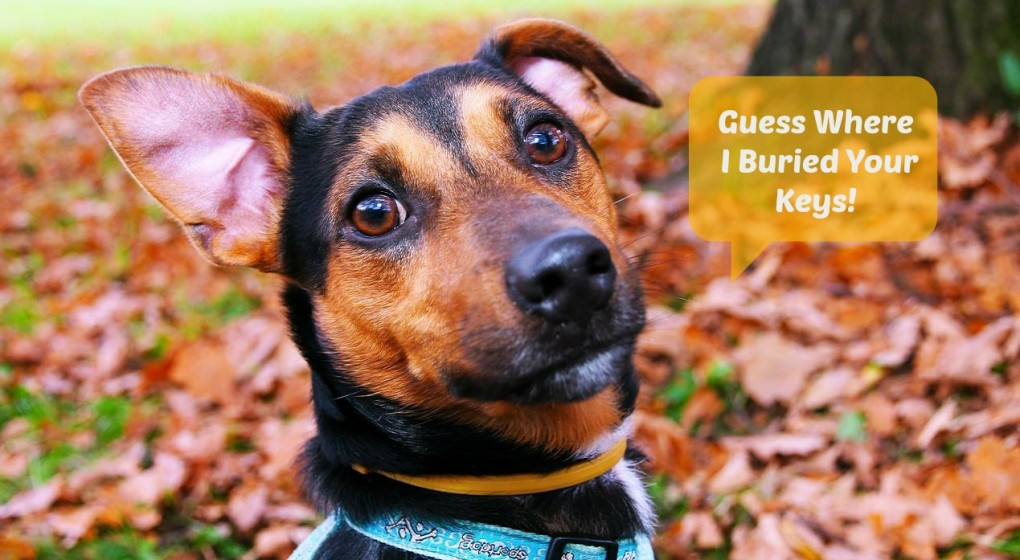How well do you communicate with your dog?
