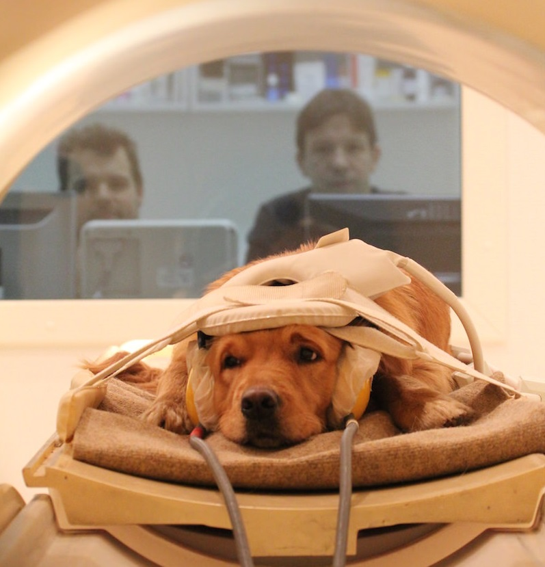 Dogs gathered around MRI scanner Image Credit: Borbala Ferenczy