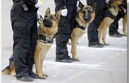 Photo Source: http://www.policedogscentre.com/