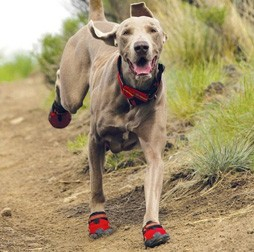 REI-Dog-Boots