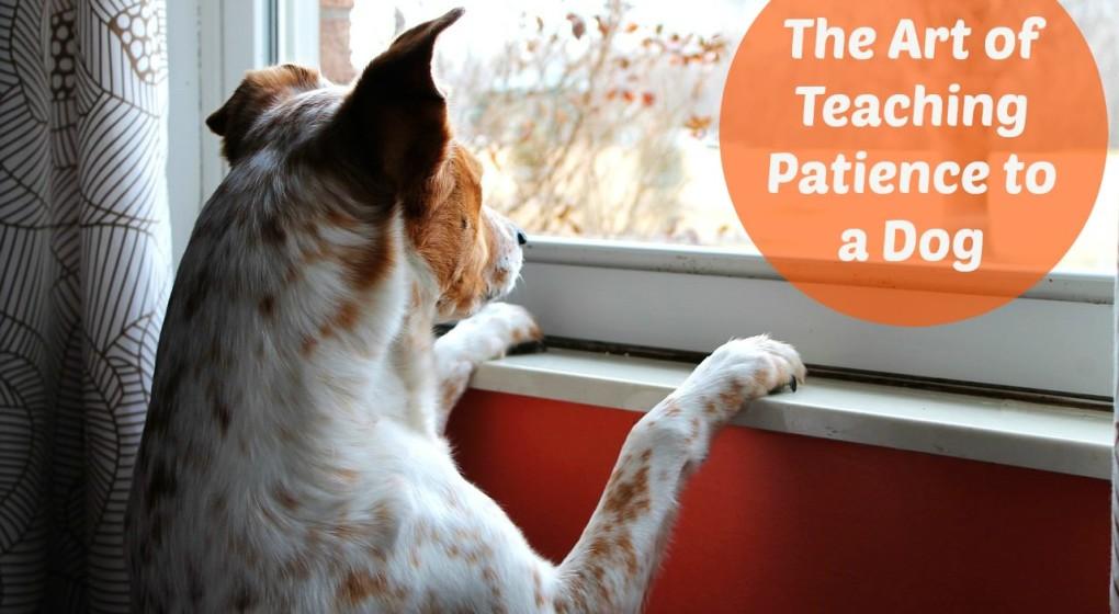 Teaching your dog impulse control