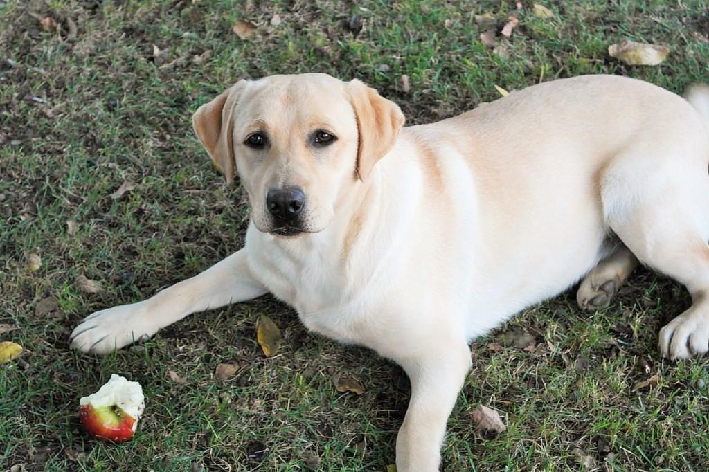 List Of Worst Dog Treats
