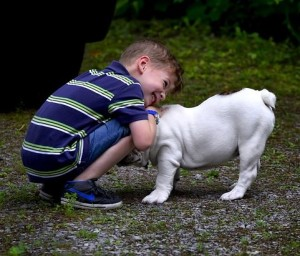 Most dog owners love our dogs just like our children.