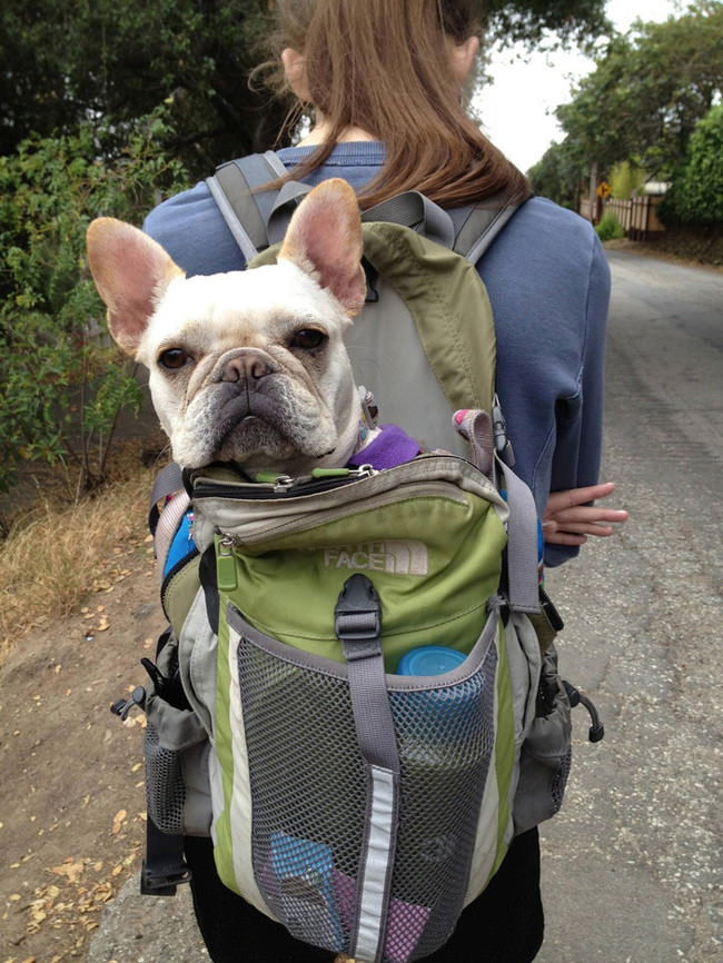 dog-in-backpack