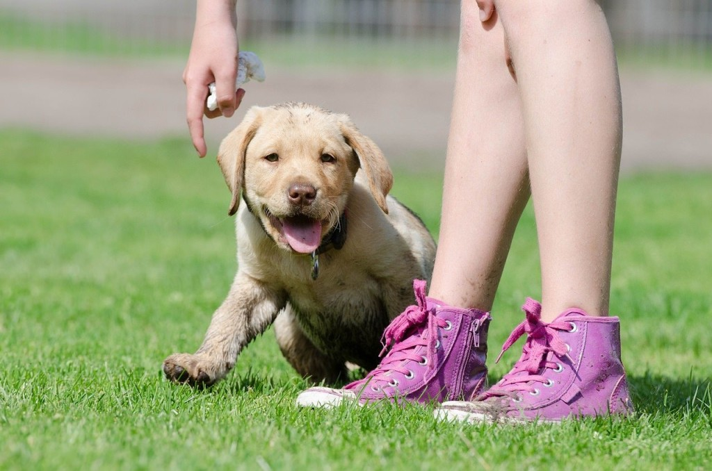 Start you puppy's training with learning basic keywords