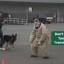 Too - Police Dog Training Exercise Bloopers