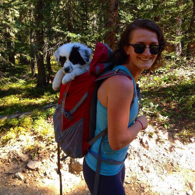 puppy-in-a-pack