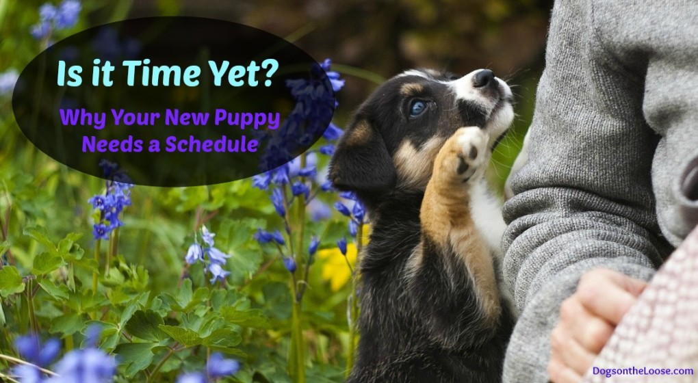 3 Important things to include in your new puppy's schedule
