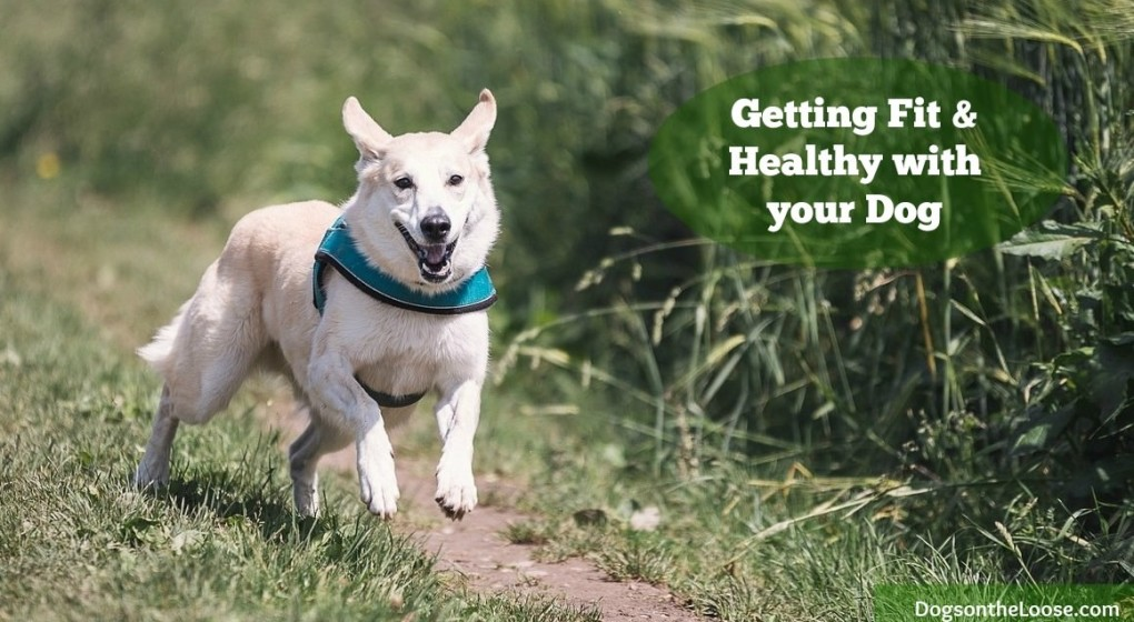 How to exercise with your dog - getting fit and healthy together.