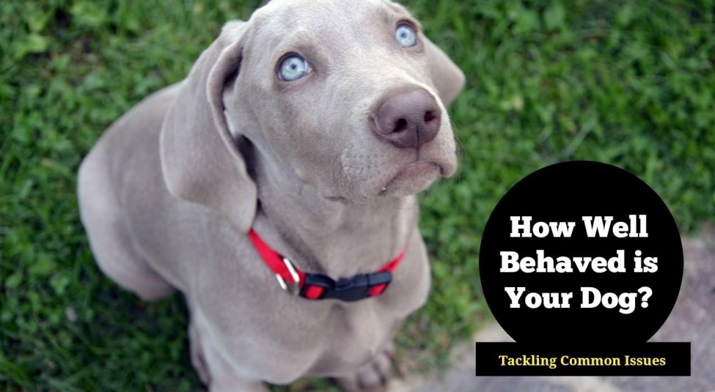 Tips on dog behavior modification for common dog problems. From jealousy to dominance and destruction, we offer tips on correcting bad dog behavior.