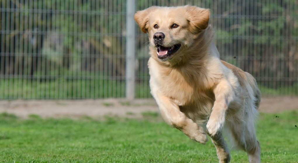 Training is a great way to bond with your dog & make day-to-day interactions much easier. But which is the best dog training methods for you and your pup?