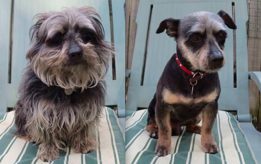 dog hair cuts