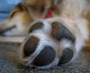 Don't forget your pups feet in summertime!