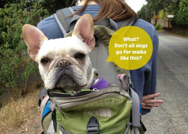 Creative ways to go hiking with your dog