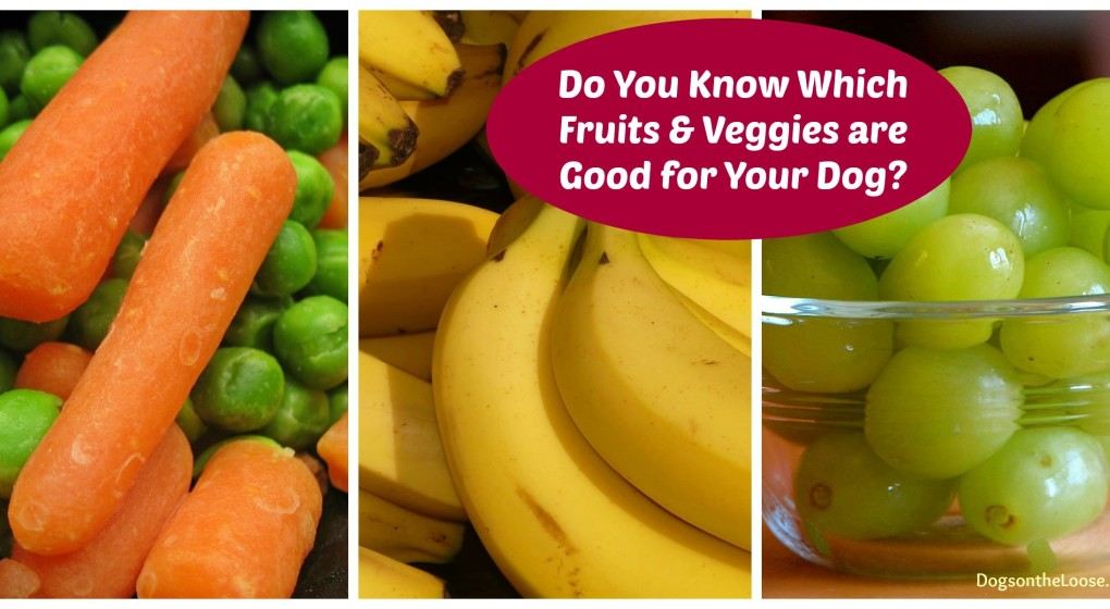 Find out which fruits & veggies are best for your dog
