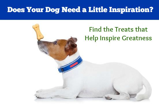 Finding the best training treats for your dog is simple. The key is find a treat he really loves. The more valuable the treat is, the more effective your training will be.