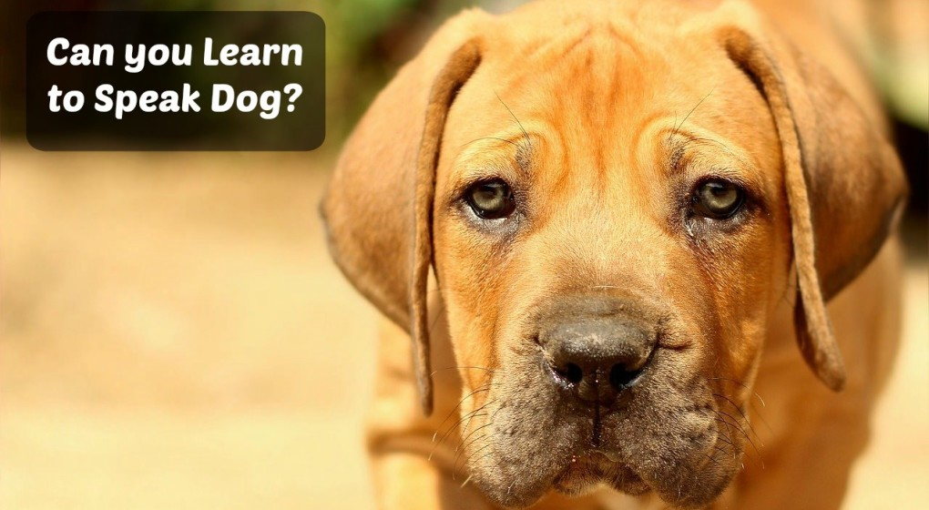 How to Talk with your Dog in their language