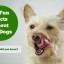 Looking for fun facts about dogs? We have compiled 10 fun facts that are sure to amaze even the most avid dog owner or trainer. Do you know all these facts? Find out.