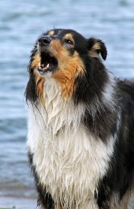 dealing with a barking dog