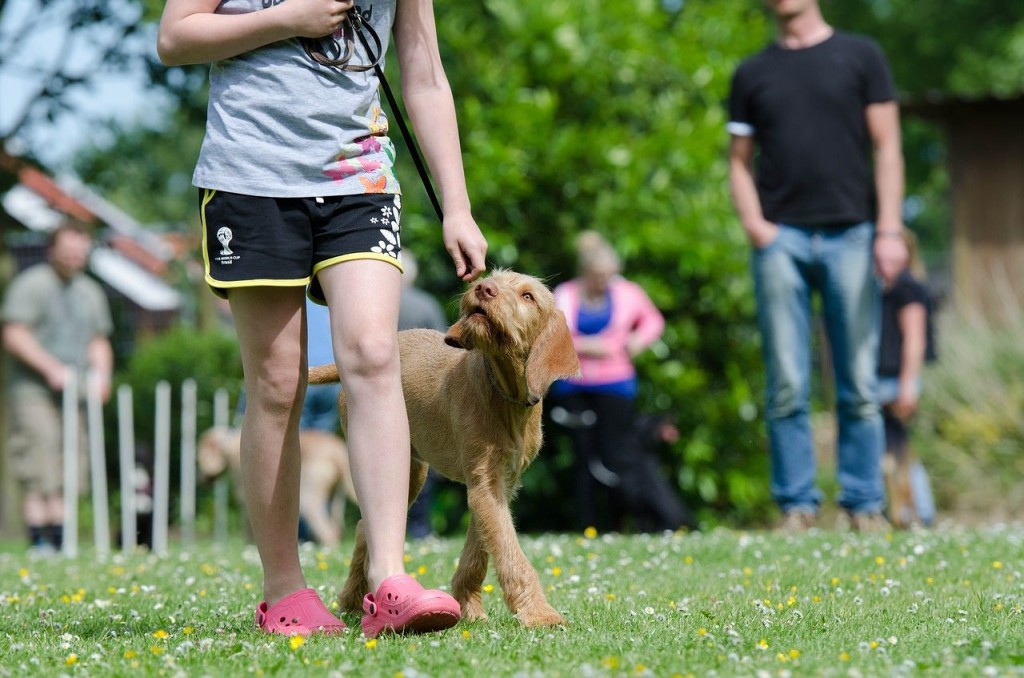 Find the best dog training schools to teach your pup
