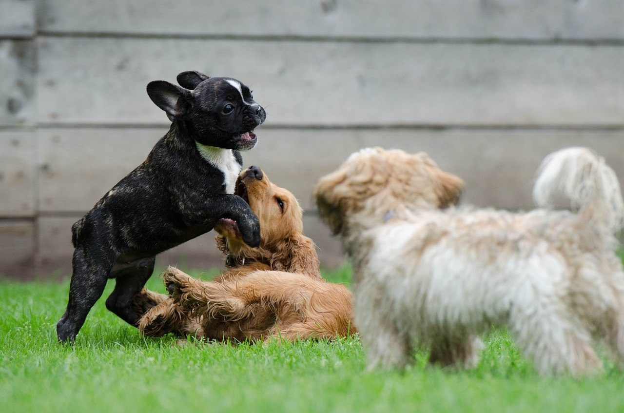 Learning social skills is an important part of the puppies education.