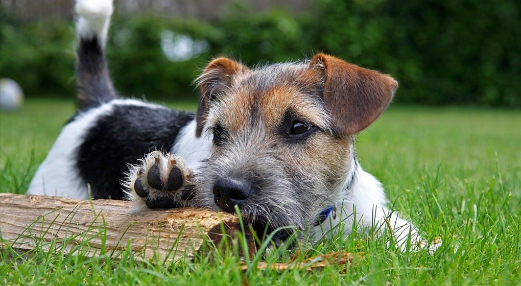 how to gain a better understanding of your dogs behavior