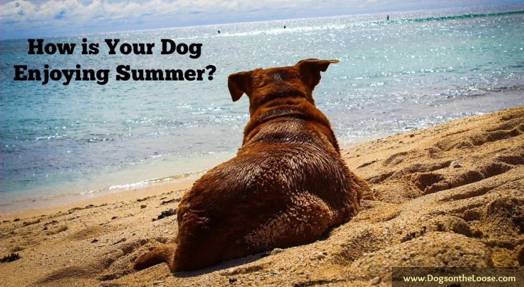 How is your dog doing this summer? If your pup is struggling through the hotter months, these 5 summer ready tips will help him beat the heat.